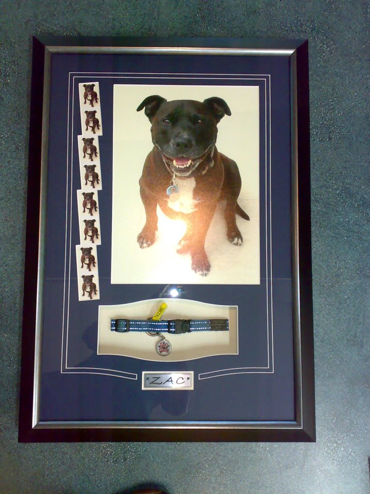 pet dog frame